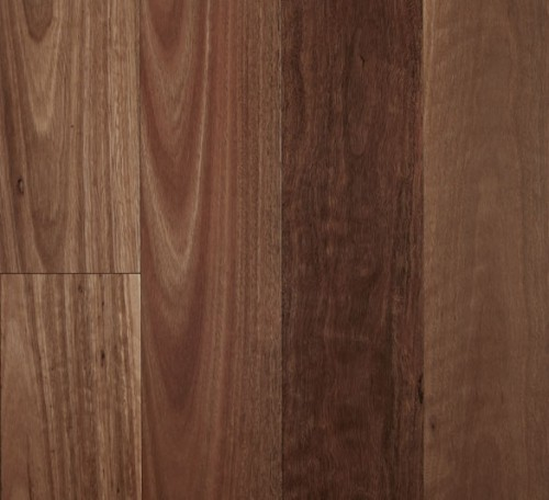 Fiddleback 12mm Semi-Gloss Spotted Gum