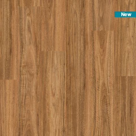 Titan Rigid Spotted Gum